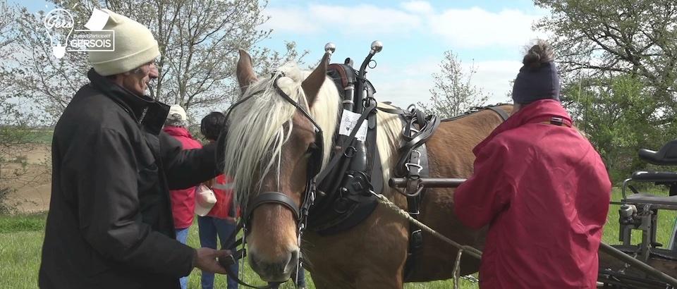 Le cheval pour entretenir les chemins